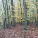 prava šuma za hojo