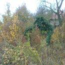 zanimiva silhueta v grmovju!!