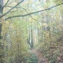 po čudovitem gozdu