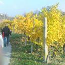 barviti vinogradi ob poti in......