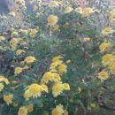 poslednje cvetje to leto