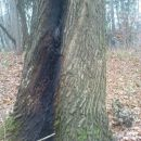 kak je tu strela ožgala drevo