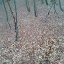 lepo po šumi