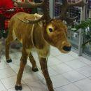 glej ga,to je Rudolf!!!