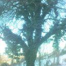 toplo suknjo si je obleklo drevo