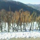 je še kar nekaj vinogradov na kolje