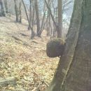 rakasta tvorba na drevu
