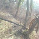 in podrtega drevja...