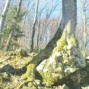 korenine najdejo svojo pot