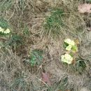 pomlad se bliža