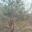 ta bor je kar celo leto okrašen