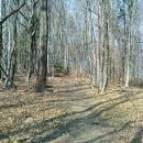 proti Gorci skozi gozd