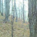 ostanki bodeče žice na drevju