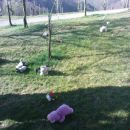 kaj je vse na travi?