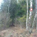 zdaj pa več ali manj po gozdu