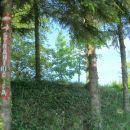tu je kar po drevju napisano