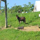 na kmetiji je lepo,ija ija,ijaooooooo :-))