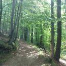 lepa pot proti vrhu Jelovic