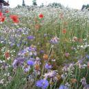 vrt samih zdravilnih rož
