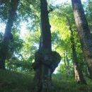 rak na drevesu