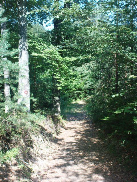Naprej po gozdni poti