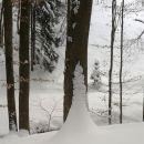 drevesa z belimi čeveljci