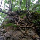 drevesna inštalacija za vodo in.....