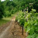 mimo vinogradov