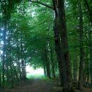 ognil sem se asfalta in lepo po gozdu