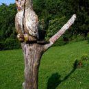 sovica Okica