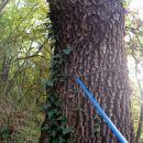 pa ne okoli dreva na živo!