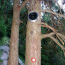 pa vura na drevu:)))))))