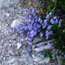 nekaj cvetja