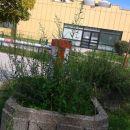 del ulice ob bolnici,to se pa res ne spodobi,korita s plevelom!!!!