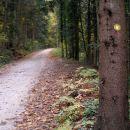 prihajamo na gozdno cesto,ki je lepo speljana pod Maceljsko goro