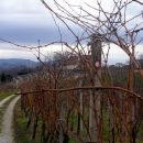 planinska pot gre po vinogradih
