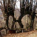 naravna vrata