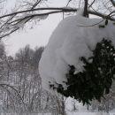 tičji lim s sneženo kapo