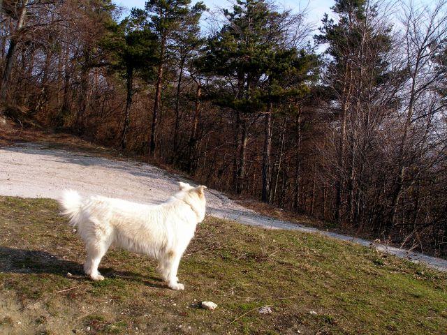 Ravna gora 8.3./28.15.7./2.2014 - foto