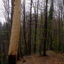na tem drevesu je detela nekaj hudo motilo :-))
