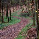 mimo britofa v gozd