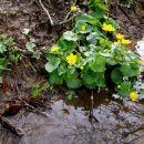 prek potoka proti zeleni dolini