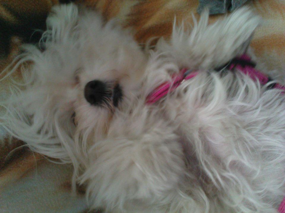 Lucy - foto povečava