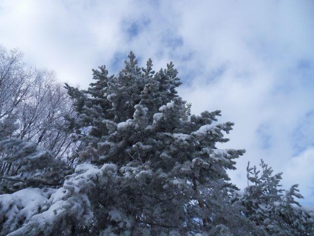 29. 11. 2010 - foto