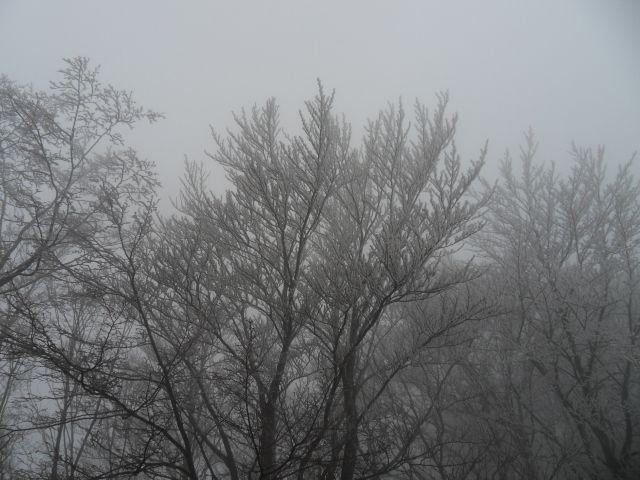 18. 12. 2012 - foto