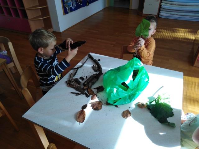 Dan brez igrač - Hobotnice - foto