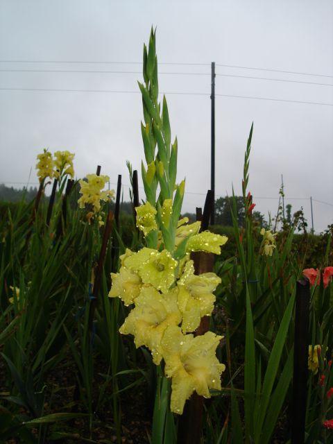 Domače-rastline - foto