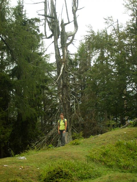 Kranjska gora - foto