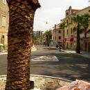 Cankarjeva cesta palma
