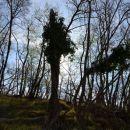 Predor Dekani, gozd ...